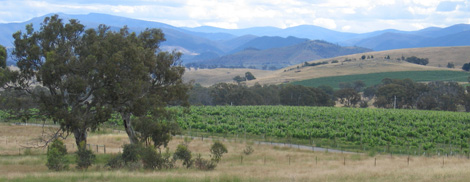 Vineyards in Holt, ACT